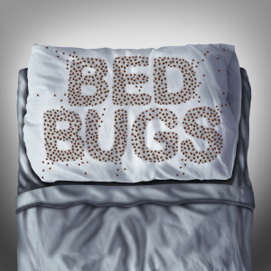 Call our bed bug control exterminators today! (954) 241-3211
