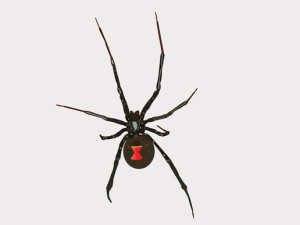 For the best spider control in Hollywood, FL, call today! (954) 241-3211