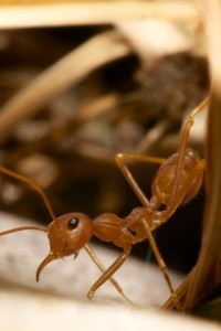 Call our ant control professionals today! (954) 241-3211